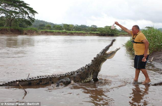 Liều lĩnh kết thân với cá sấu khổng lồ suốt 15 năm